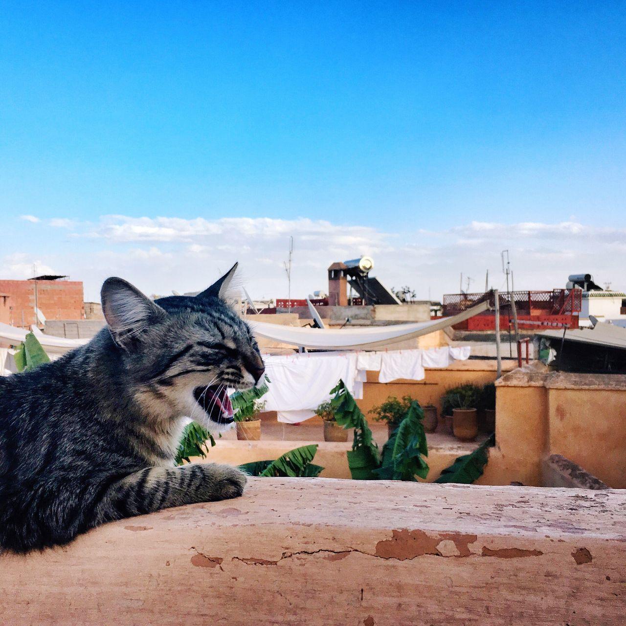 Cats Of Marrakesh Visit Marrakesh Rooftops Marrakesh