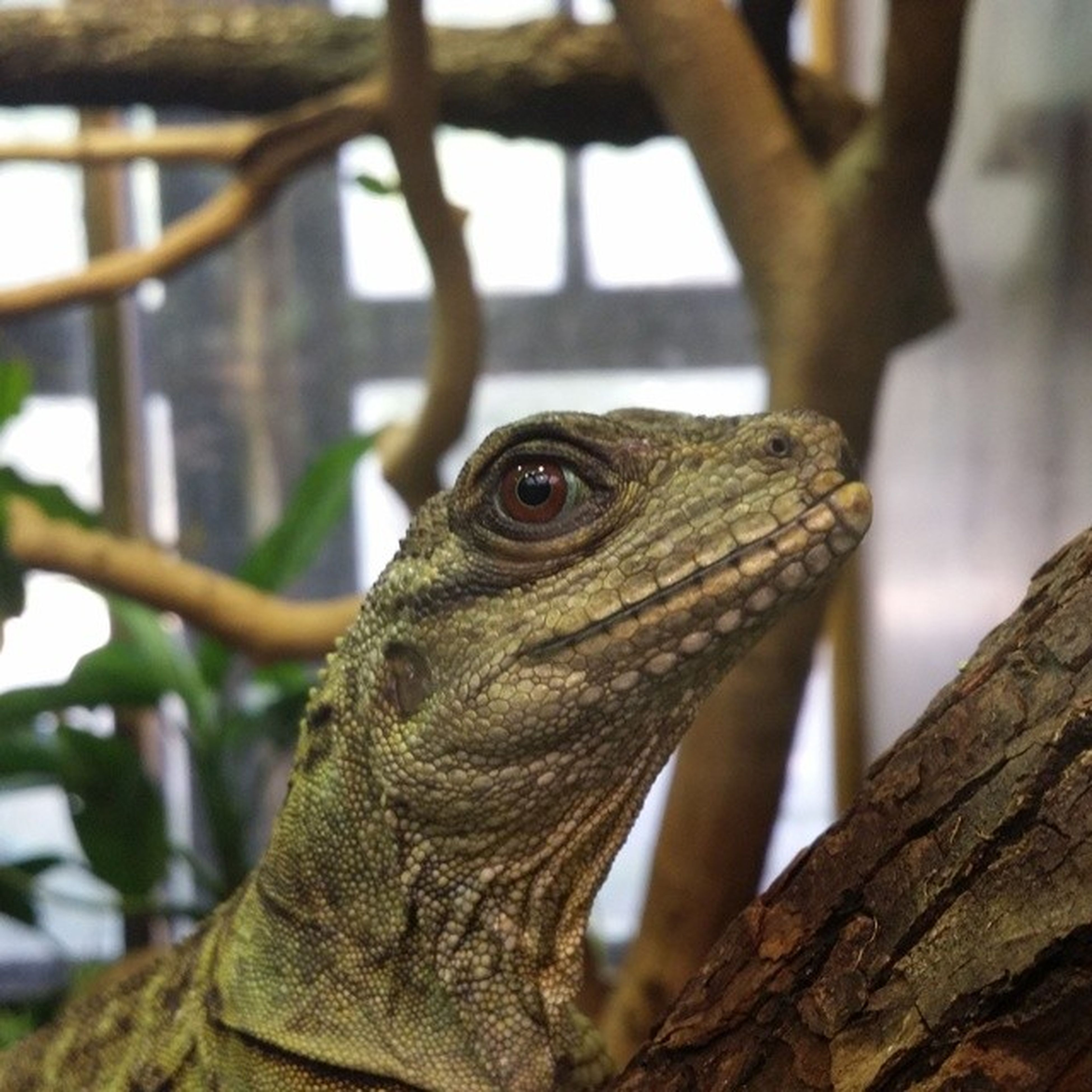 animal themes, one animal, animals in the wild, wildlife, focus on foreground, close-up, lizard, branch, animal head, bird, reptile, tree, perching, day, nature, selective focus, outdoors, side view, part of, zoology