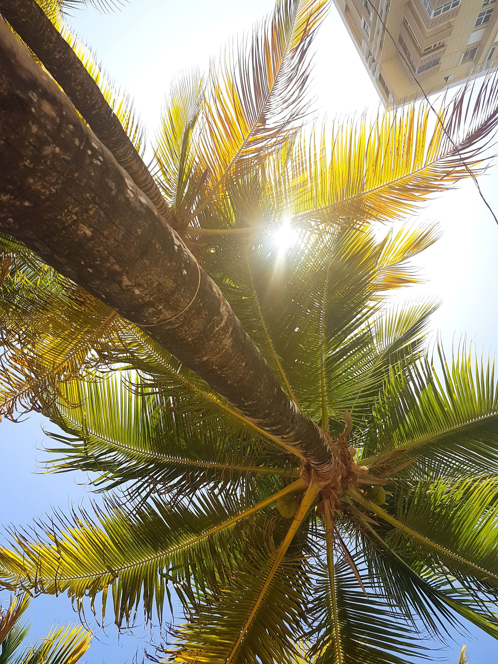 palm tree, low angle view, tree, no people, palm frond, growth, day, nature, outdoors, sky, beauty in nature, close-up, freshness