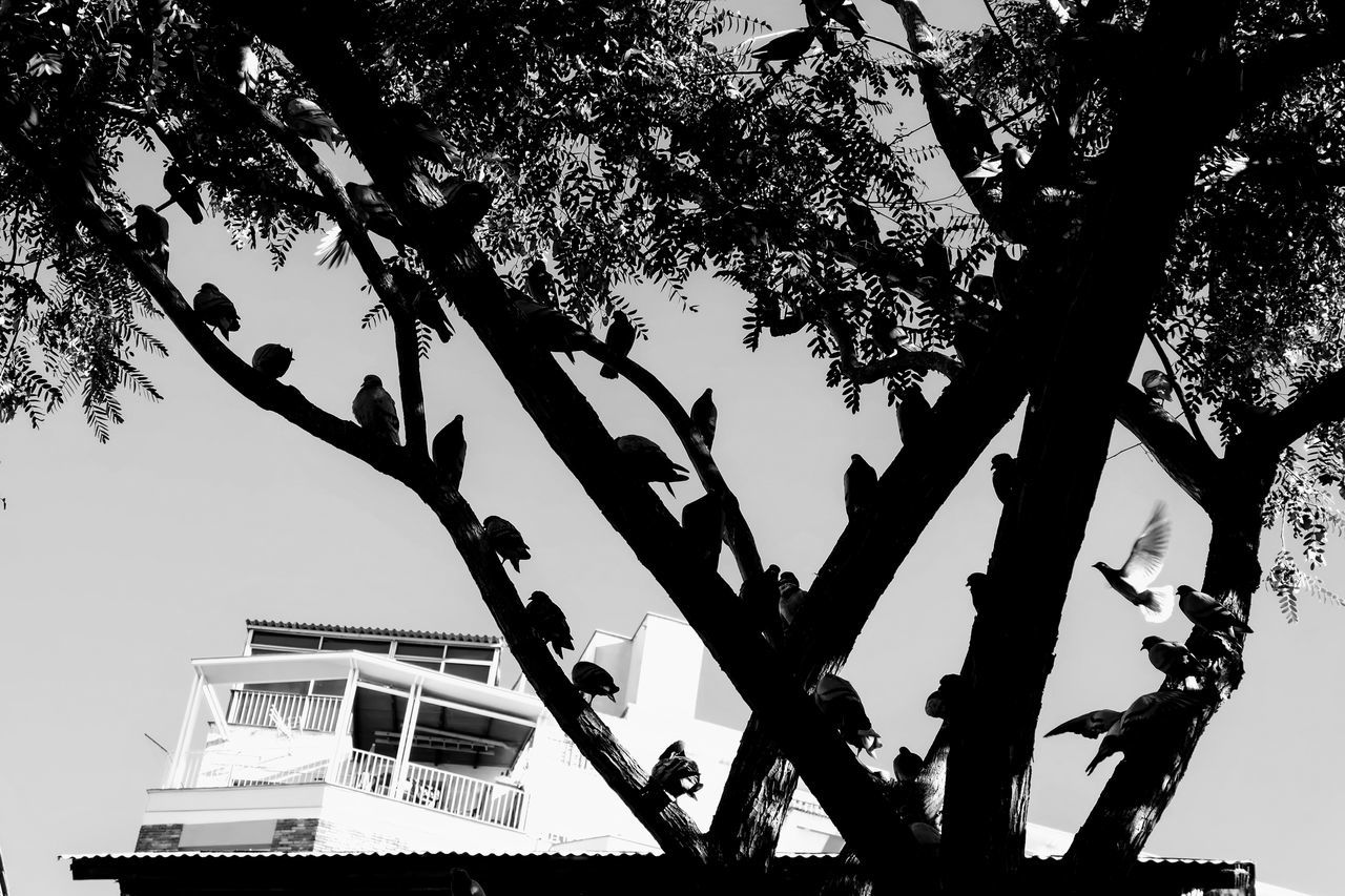 Black And Grey Blackandwhite Branch Chilling Day Outdoors Pegion Feather Pigeonslife Siesta Siesta Time The Birds Tree Walk In The Park