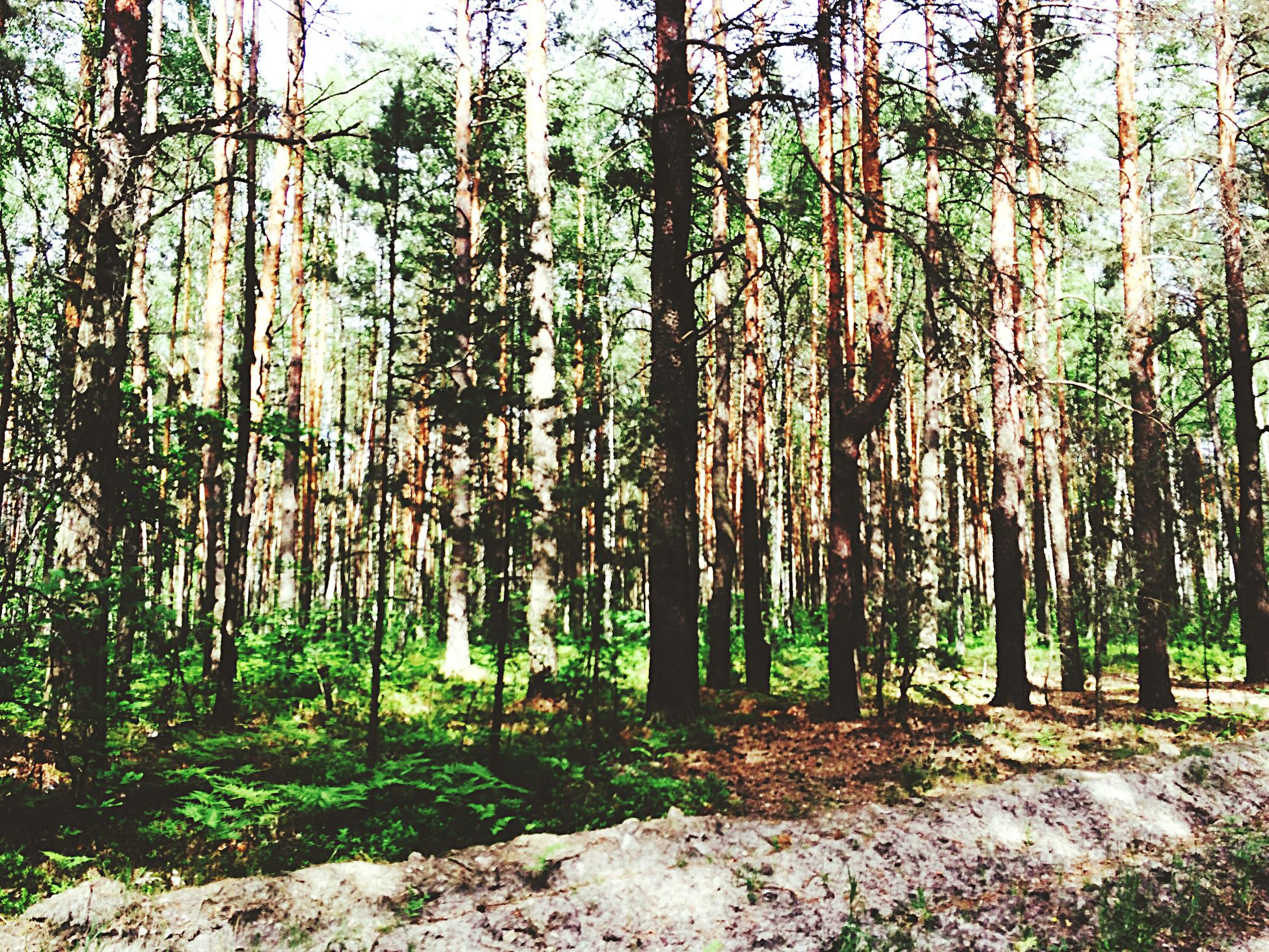 This forest🍃