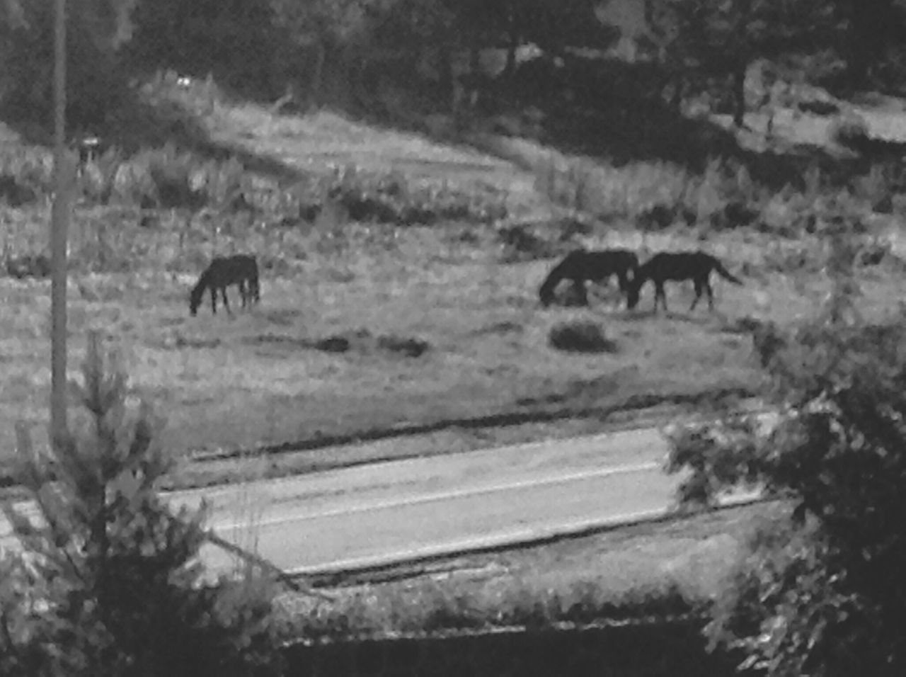 Traveling Blackandwhite On The Road Horse