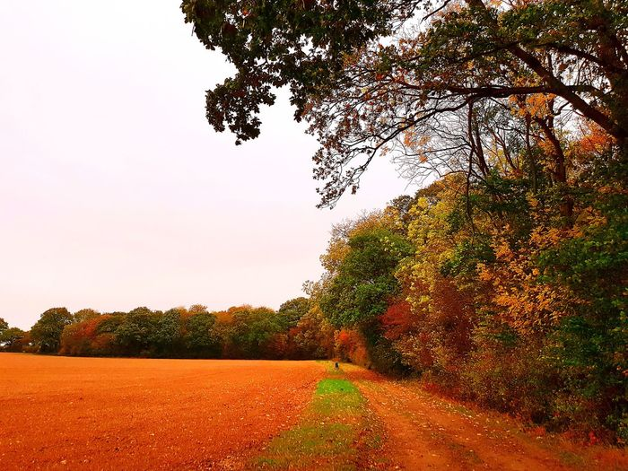 Tree Nature Growth No People Tranquility Outdoors Beauty In Nature Agriculture Freshness Day Sky WoodLand Essex Tranquility Leaf Earls Colne Beauty In Nature Walking In The Woods Ancient Woodland Sudbury Autumn🍁🍁🍁 Autumn Colors Autumn Leaves Water Grass