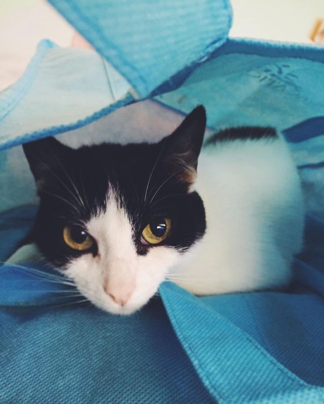 Cat In The Bag Hidding