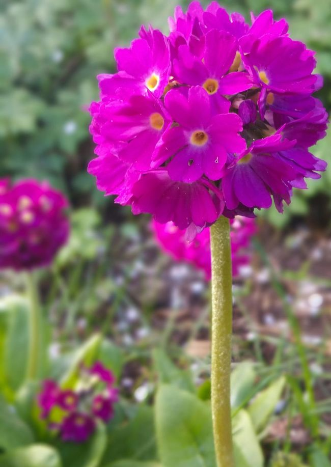 Sunshine Closeup Pink Flower Flower Ball