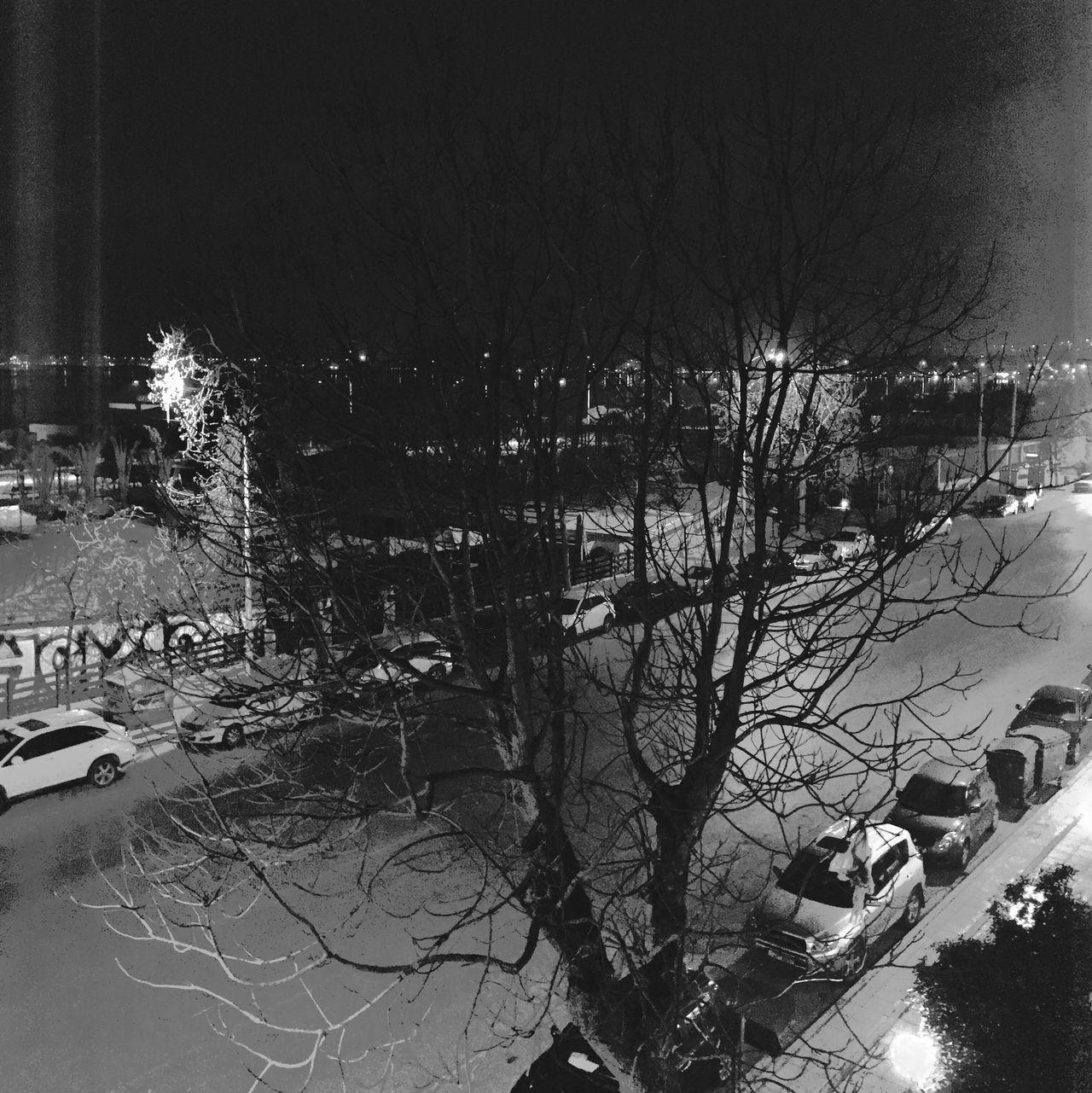 The City Light Tree No People EyeEm Bnw Mobilephotography