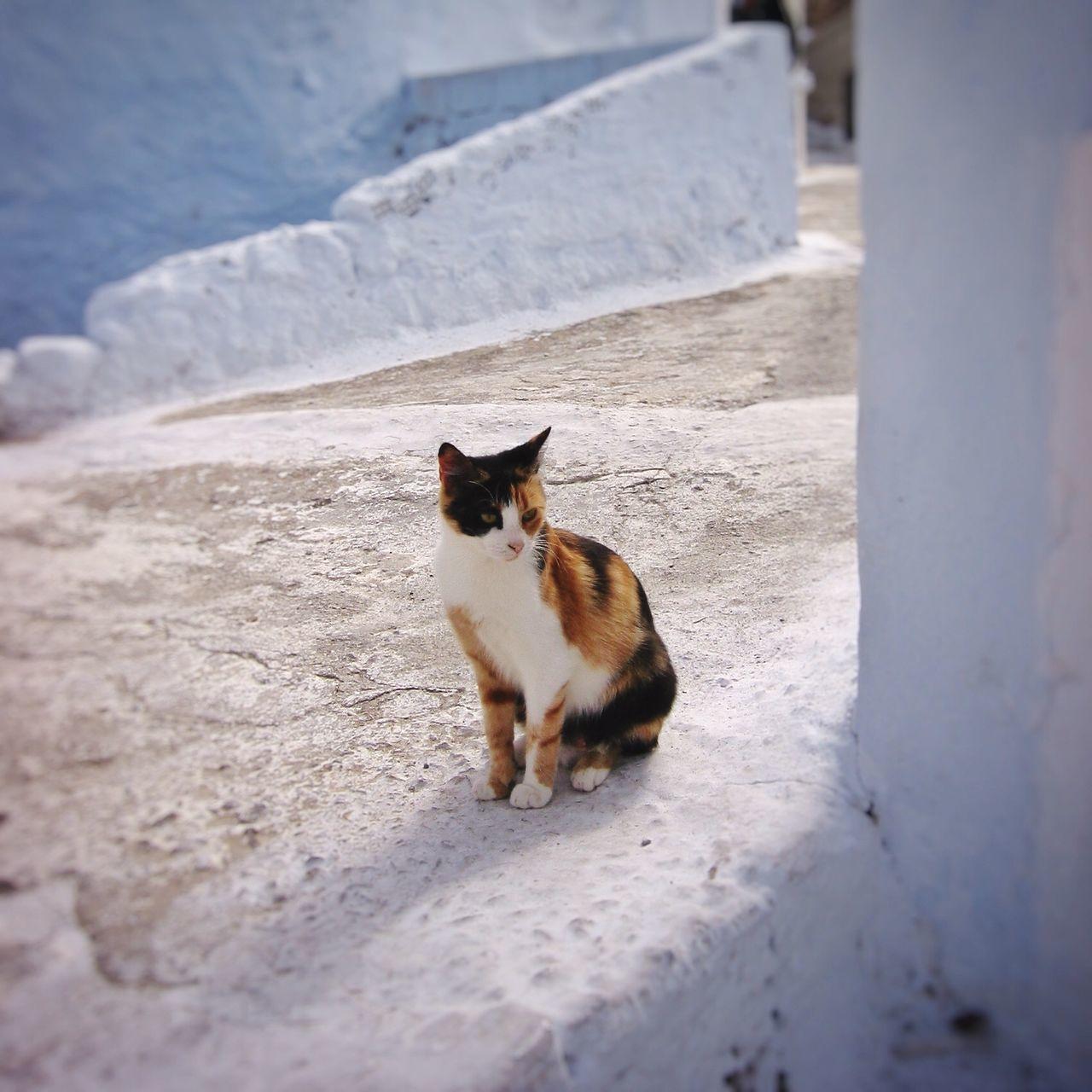 Cat Looking Away On Footpath