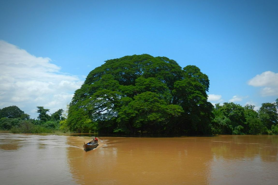 Mekong River Dondet LAO Laos Island Ferry Big Tree Cambodia Boat Longtailboat Bagpacking Trip Mekong Exploring Nature Beauty In Nature 4000 Islands ASIA Excited Nervous Amazed Happy Relaxing Thinking About Life Backpacking People And Places