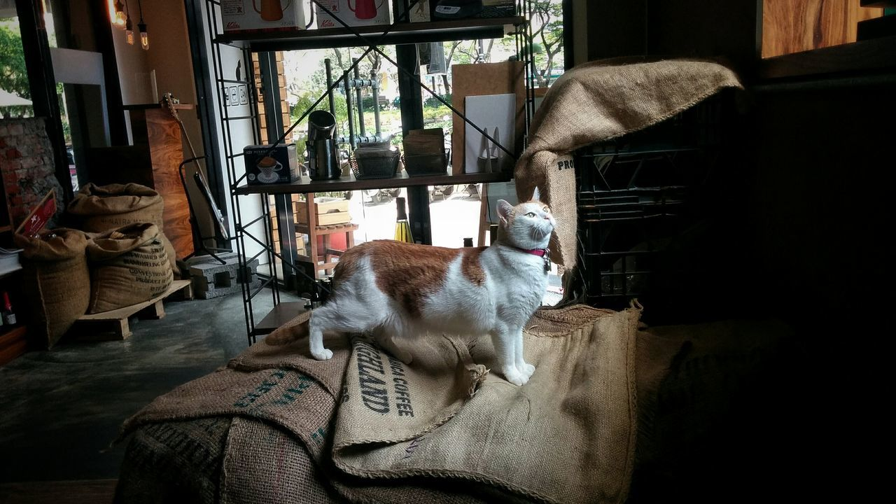 Coffee Relaxing Urban Lifestyle City Life EyeEm Gallery Urbanexploration Eye4photography  EyeEm Taiwan Eyeem4photography Cat Cats Of EyeEm Window Light Indoors  Showcase April