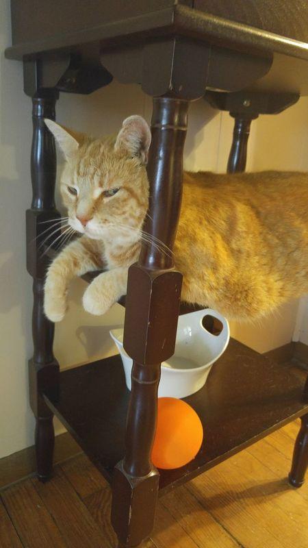 Orange Cat Cat On Table Cat Orange No People, Indoors Relaxing Moments  Sleepy Cat Sleepy