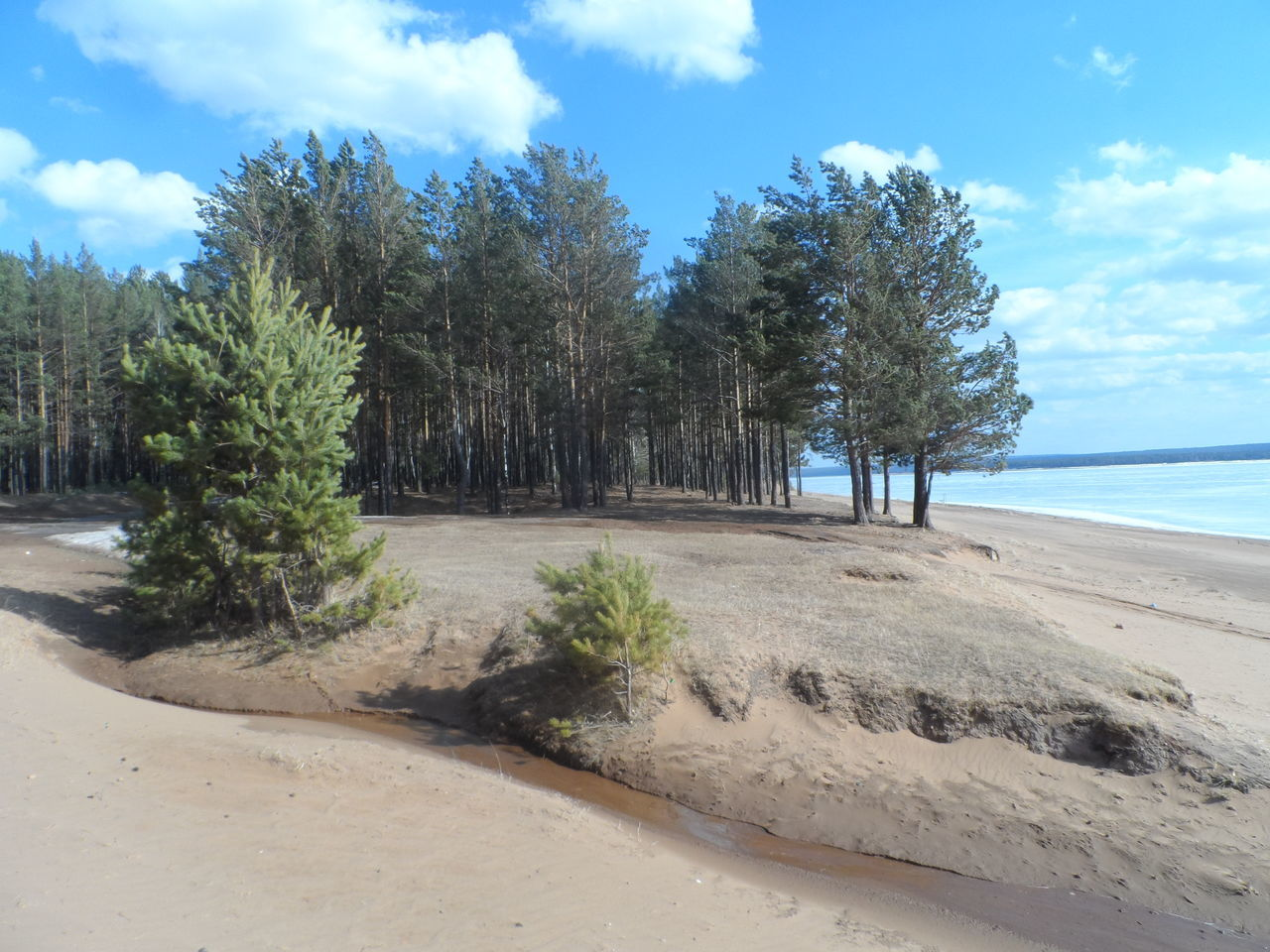 tree, sky, nature, sand, cloud - sky, tranquil scene, tranquility, beauty in nature, day, scenics, beach, no people, outdoors, water, growth, sea