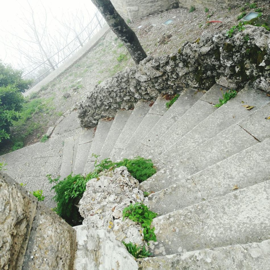 No People Nature Tree Day Outdoors High Angle View Water Nature Close-up Freshness Stairs Stair Stairway The Secret Spaces