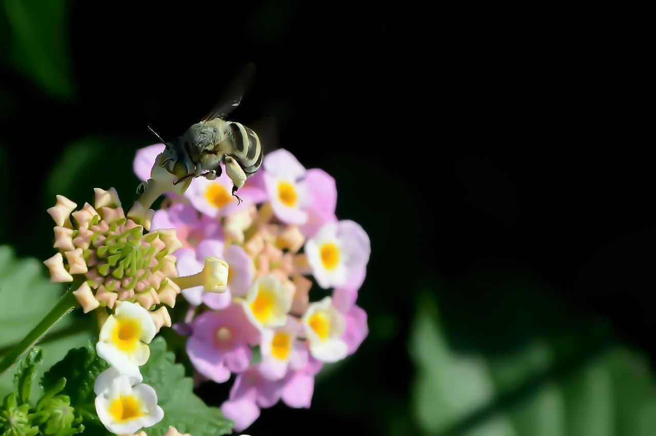 Animal Themes Animal Wildlife Animals In The Wild Beauty In Nature Bee Close-up Day Flower Flower Head Fragility Freshness Insect Nature No People One Animal Outdoors Petal Symbiotic Relationship