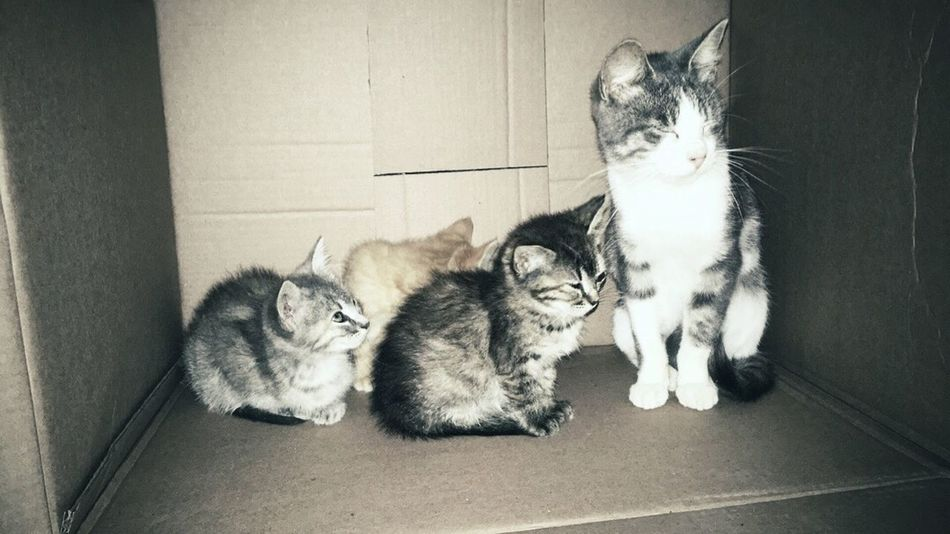 Pets Domestic Animals Animal Themes Domestic Cat Mammal Feline Togetherness Cat Young Animal Front View Animal Kitten No People Cats In A Box Cats In Random Places Love