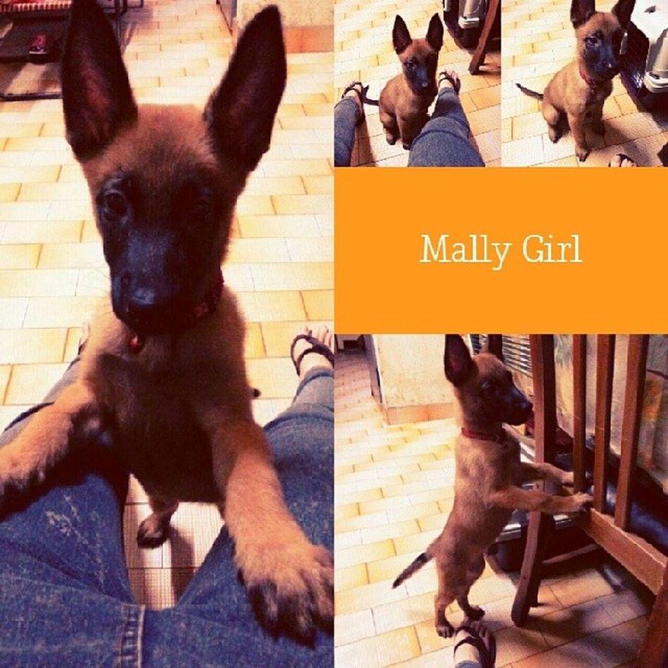Maligator Mally