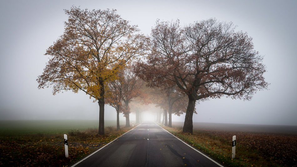 trees and fog and road Autumn Autumn Autumn Colors Beauty In Nature Branch Day EyeEm Best Shots EyeEm Nature Lover Fog Growth Landscape Landscapes With WhiteWall Leaves Long Exposure Long Goodbye Nature Nature No People Outdoors Road Symmetry The Way Forward The Way Foward Tree Vanishing Point The Secret Spaces