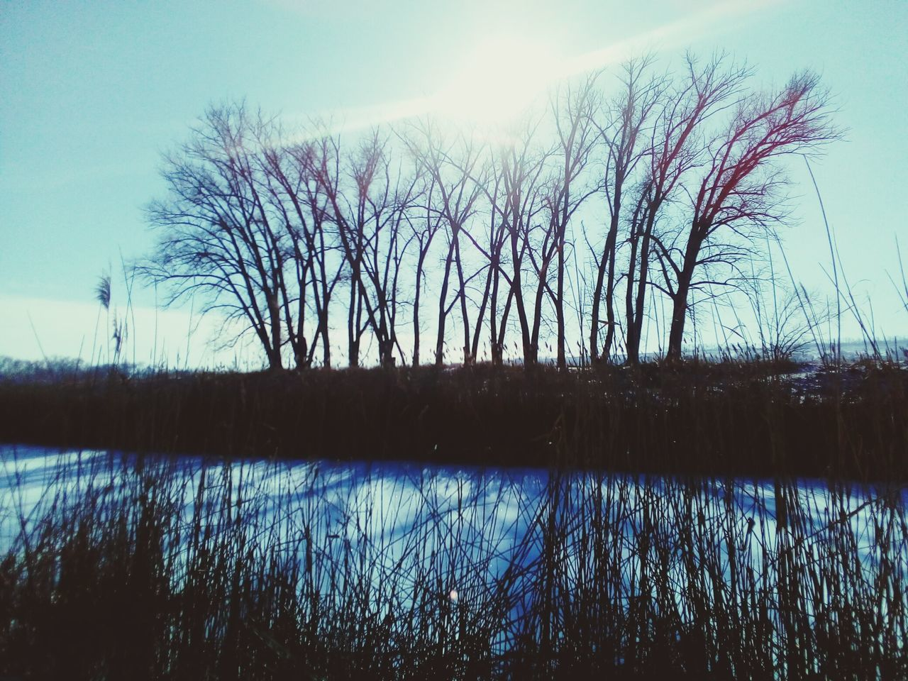 tranquil scene, reflection, tranquility, nature, scenics, beauty in nature, lake, sky, bare tree, outdoors, water, tree, no people, silhouette, grass, plant, landscape, day, sunset