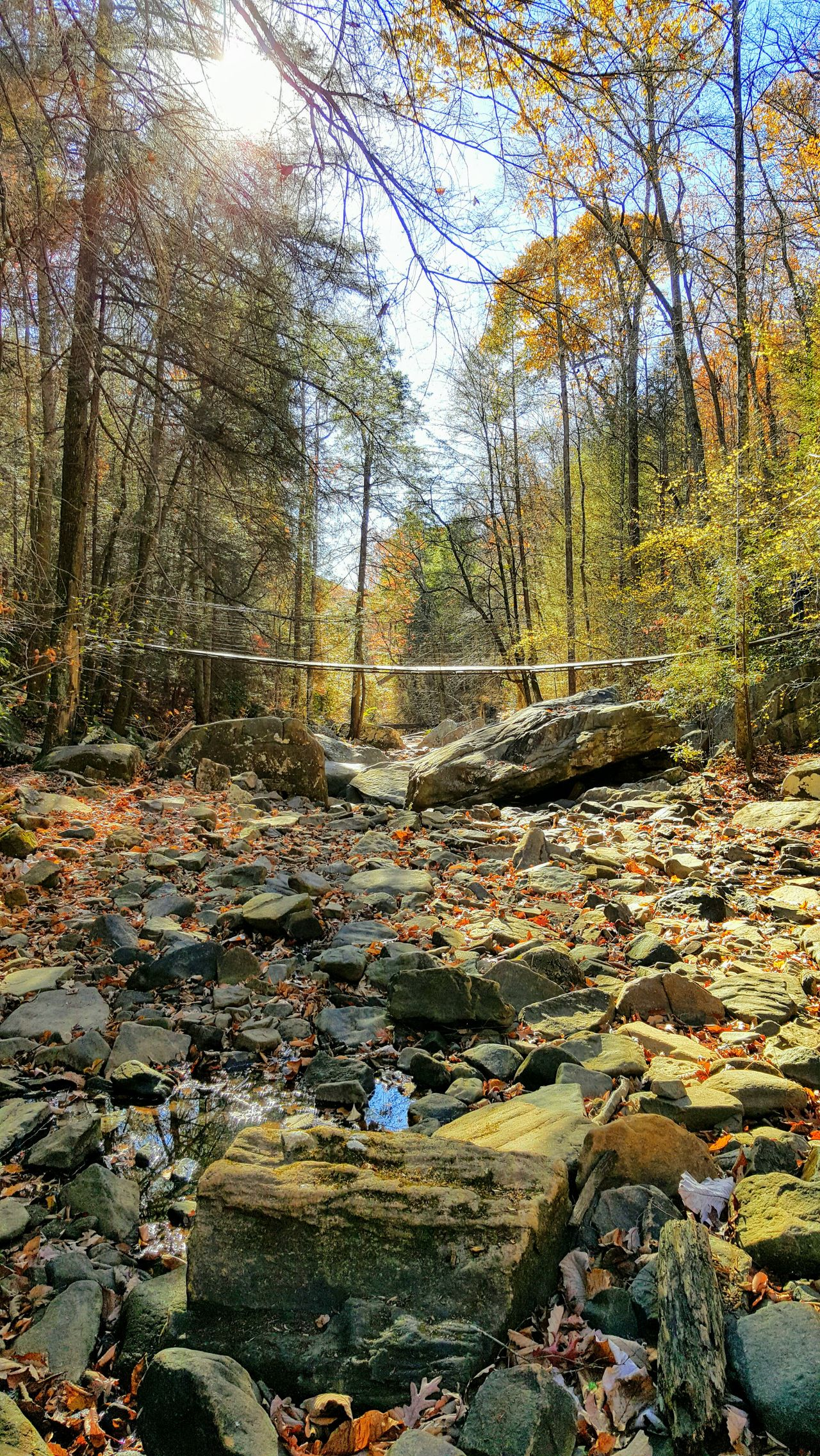 Chattanooga Tennessee Chattanoogastrong Tennessee No People Trail Creekside Trail Fall Colors Fall Collection Nature Finding New Frontiers New Frontiers Pioneers Hiking Adventures Hiking Trail