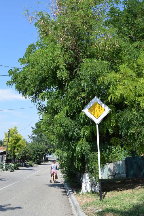 Blue Day Grass Green Color Growth Information Sign Leisure Activity Lifestyles Nature Outdoors Plant Road Road Sign Sky The Way Forward Tree Acacia