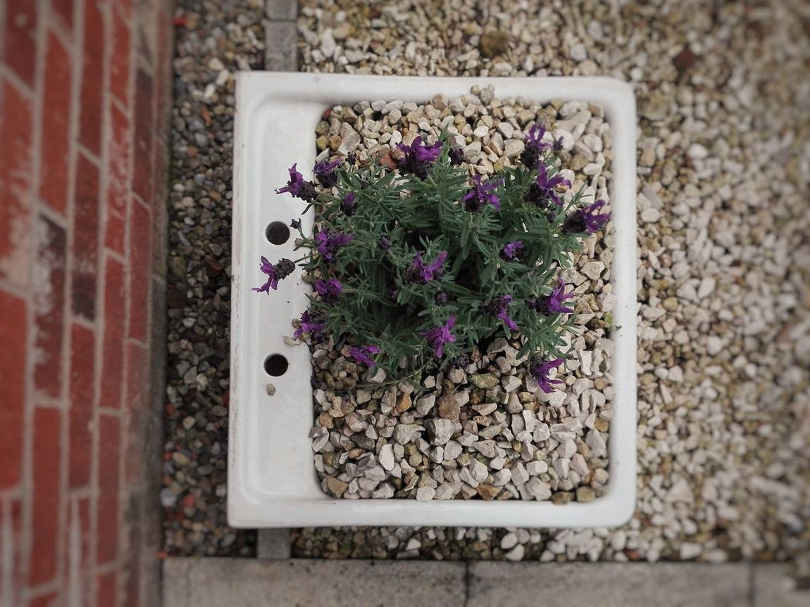 Flower Purple Plant Day Nature Outdoors Growth Freshness Flower Head EyeEmNewHere Sink Taps Plant Plantpot Stones Pebbles Pebbles And Stones
