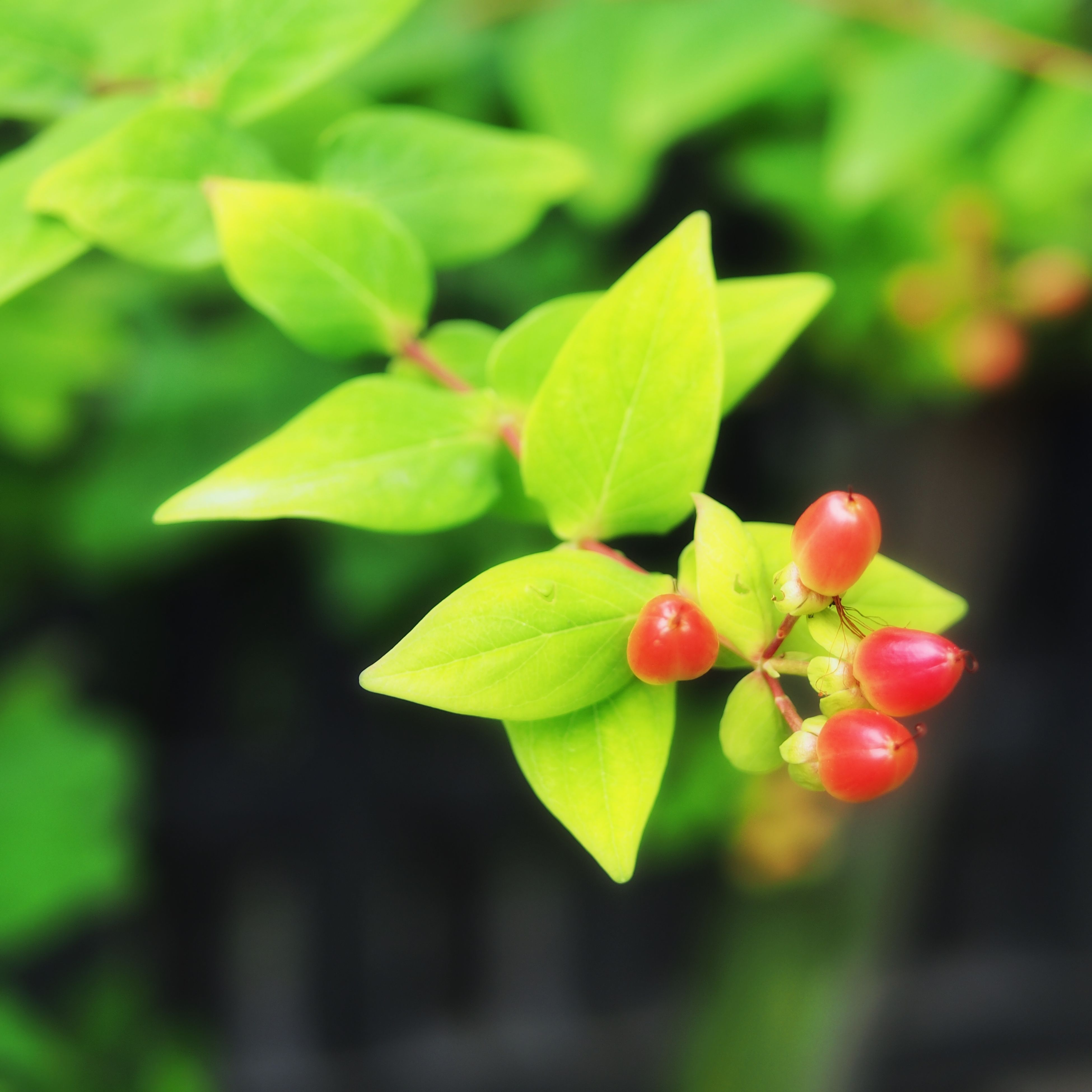 growth, leaf, focus on foreground, close-up, green color, plant, nature, freshness, beauty in nature, selective focus, red, day, outdoors, flower, no people, fragility, bud, branch, stem, growing