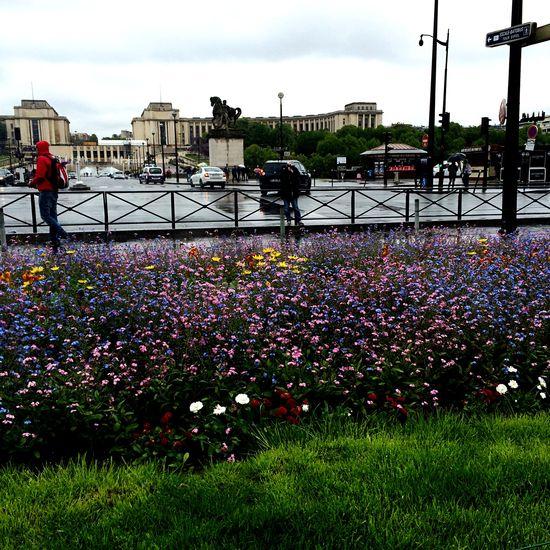 Hi friends Flower Flowers Flowerpower Paris City Trip Rain Spring Toureiffel