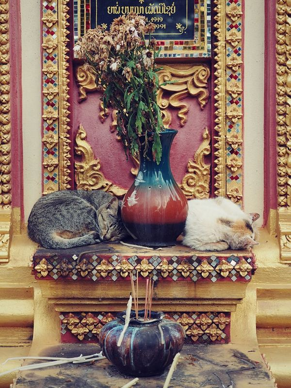 Guardians of the temple... Cats Cat Peaceful Tomb Rest In Peace Series Travel Peace