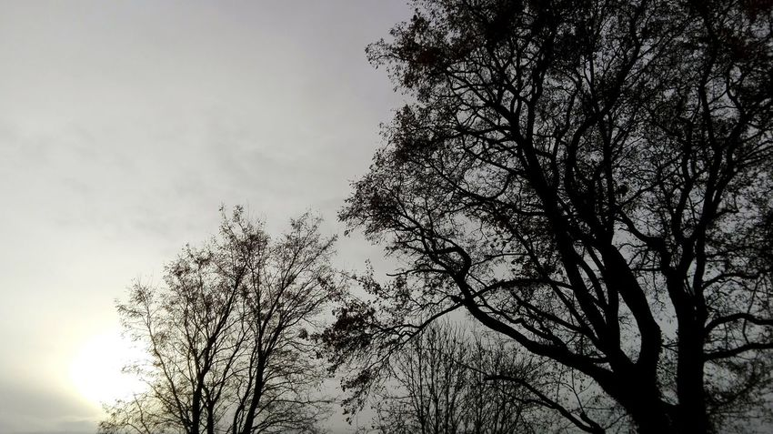 Tree Tranquility Silhouette Low Angle View Outdoors November2016 Autumn 2016 The Places I've Been And The Things I've Seen Winter Is Coming... How Is The Weather Today First Touch Of Winter Coldoutside Tree_collection  Sun Good Morning! TreePorn Skyporn