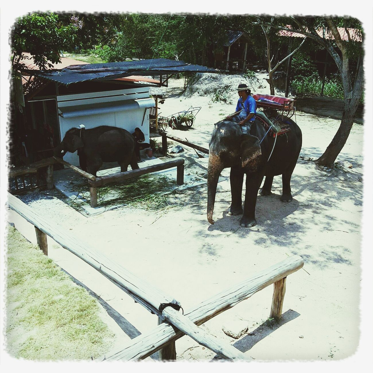 A day with friendly elephant. Vacation