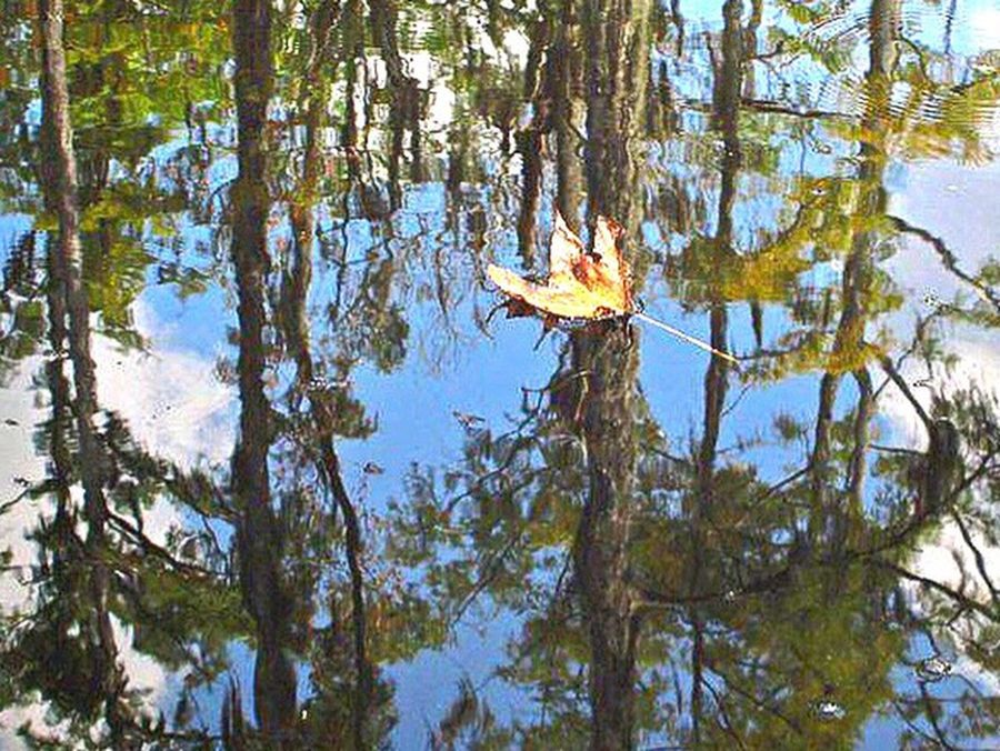 Tree Nature Sky Growth Beauty In Nature Reflection Water Day Lake No People BeautifulTrip Leaf Tranquility Harmony Simplelife