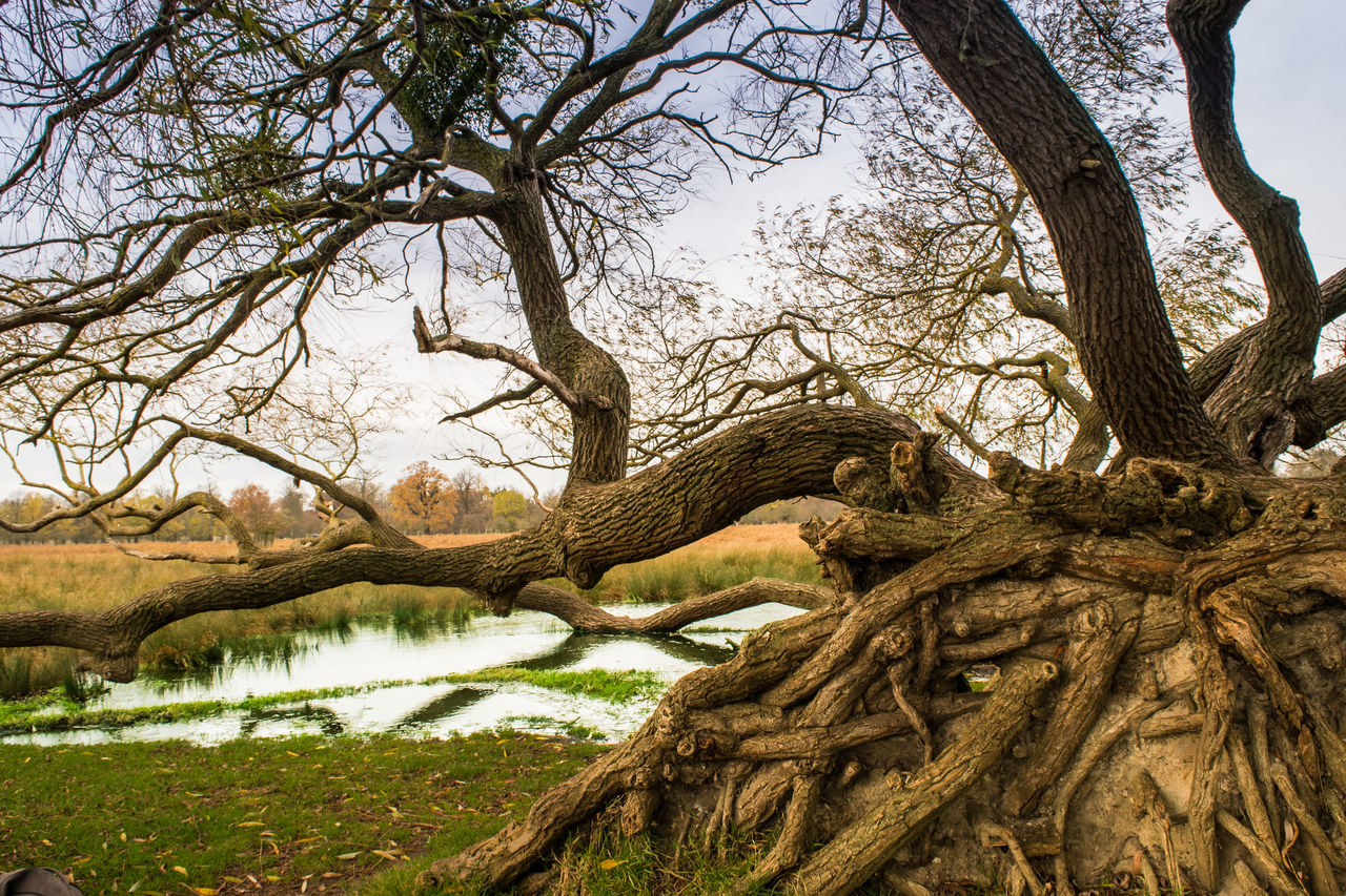 Atmospheric Mood Blurry Picture Bushy Park Day Different Perspective Eye4photography  Eyemphotography Fallen Tree Lanscape Photography Nature Nature_collection No People Not My Best Photo Outdoors Reflection_collection Roots Of Tree Sky Spooky Trees Tree Water Trees Leaves