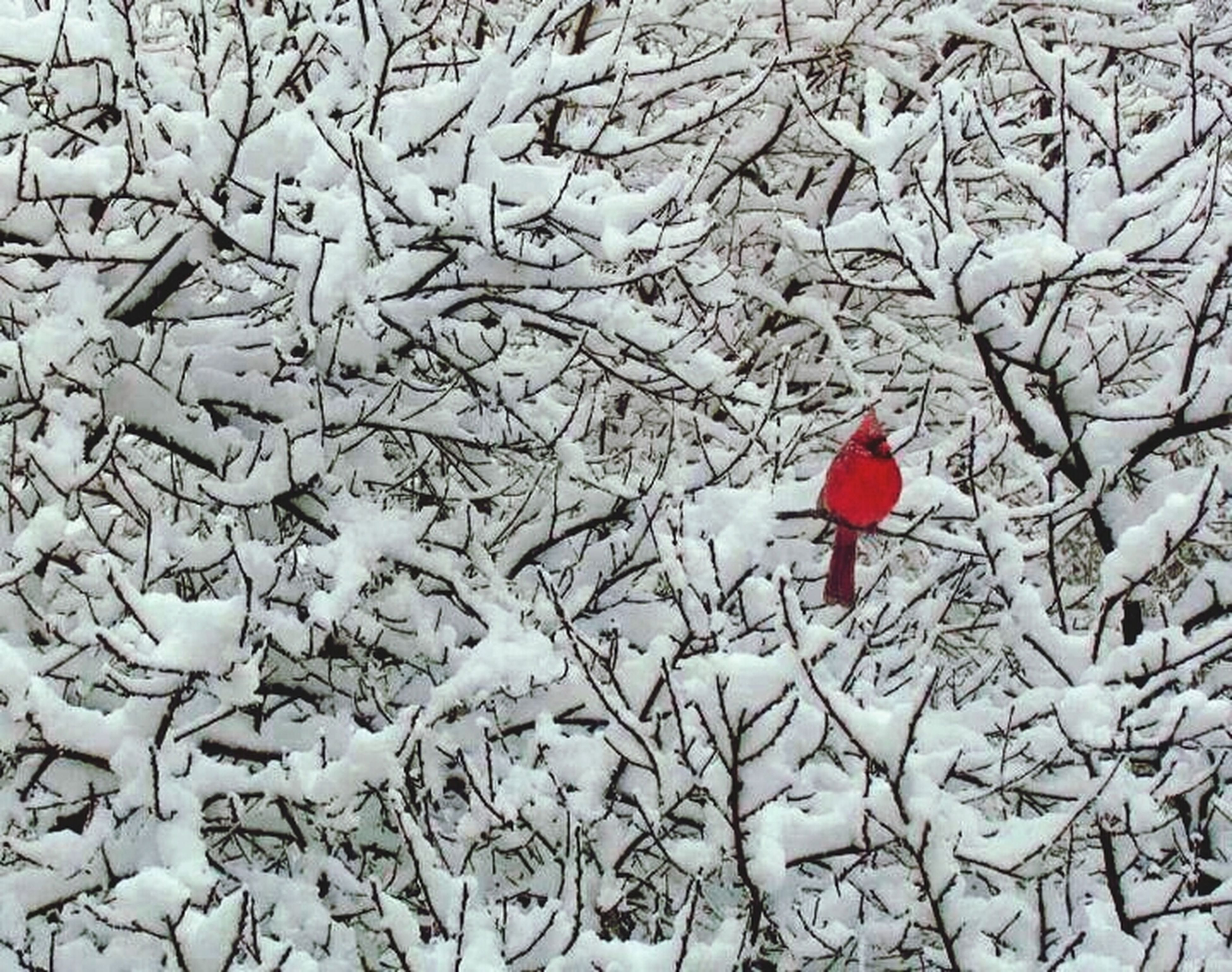 bird, red, bare tree, winter, snow, cold temperature, high angle view, season, branch, water, reflection, lake, nature, weather, tranquility, day, tree, no people, outdoors, beauty in nature