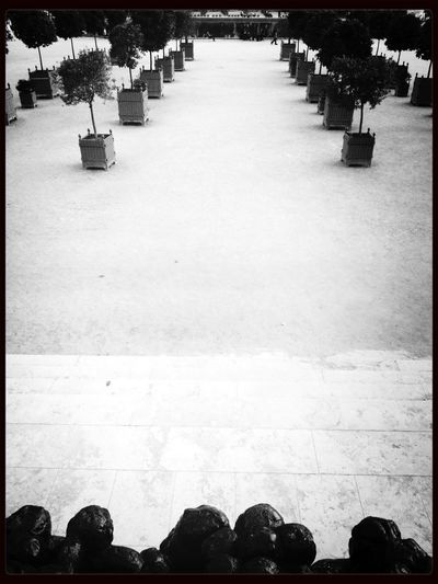 End of a good day First Eyeem Photo Jardin Des Tuileries Paris Black & White
