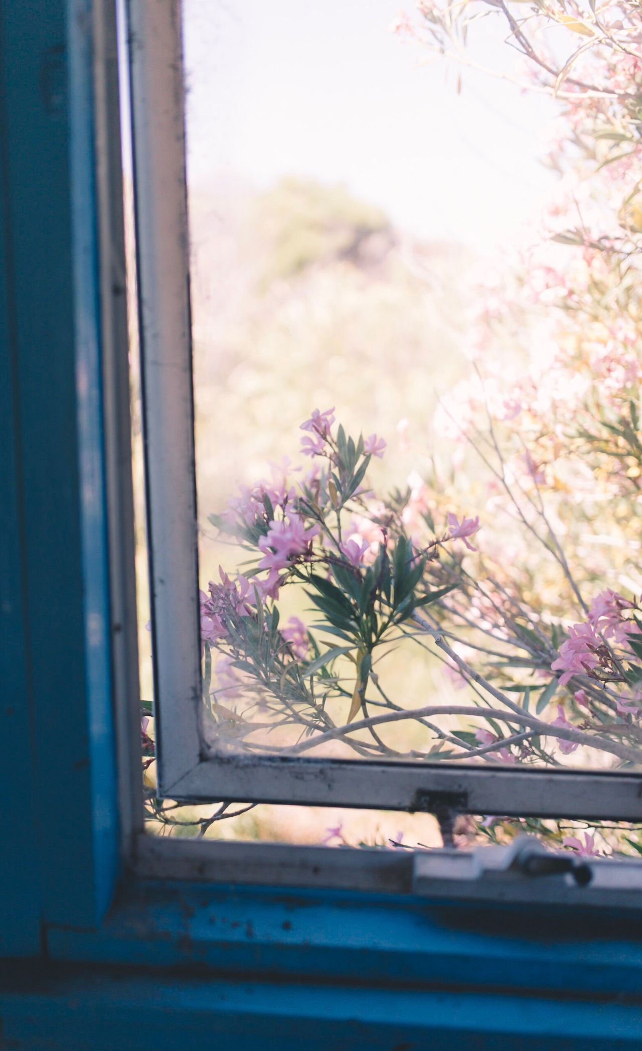 The Week On EyeEm No People Day Nature Outdoors Nature Fragility Window Flower Sky Looking Through Window Tree Plant Beauty In Nature Indoors  Close-up