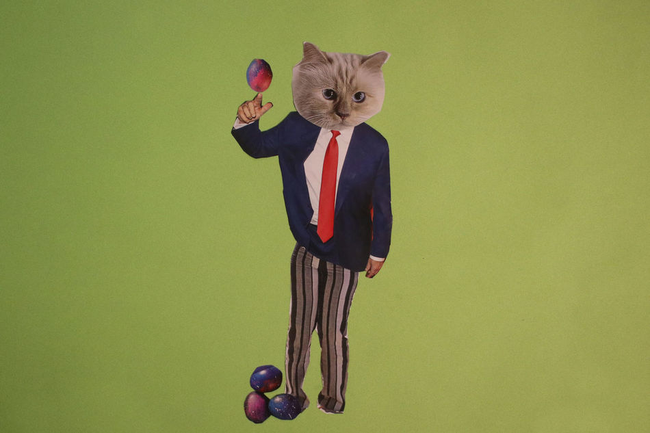 Animal Themes Cat Cats Collage Domestic Animals Domestic Cat Egg Feline Fur Green Handmade Indoors  Magazine Magic Mammal Mashup Paper Paperwork Pet Pets Political Politics President Suit Tie Cut And Paste