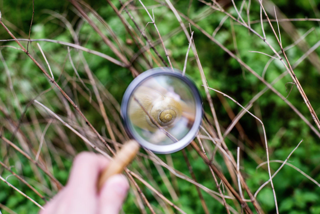 Animal Themes Close-up Eco Ecosystem  Grass Green Holding Human Body Part Human Finger Human Hand Loop Magnifying Glass Nature Outdoors Research Snail Studying
