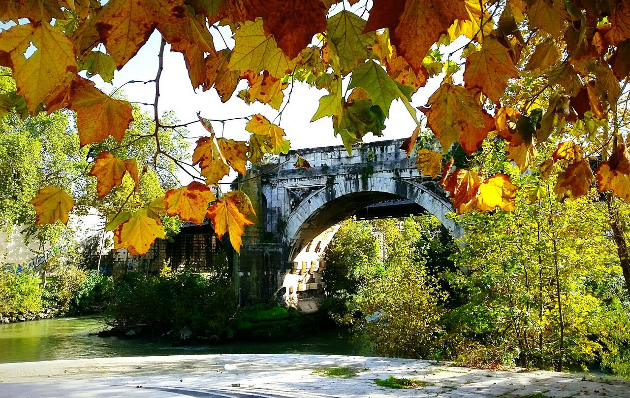 autumn, arch, bridge - man made structure, leaf, tree, day, nature, built structure, outdoors, architecture, growth, connection, no people, change, water, beauty in nature, plant, branch