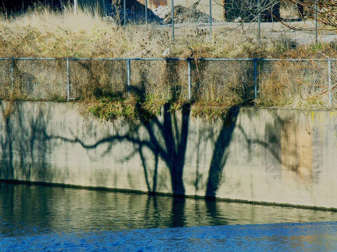Urban Nature Shadows Tree Sunnydays Fujifilm