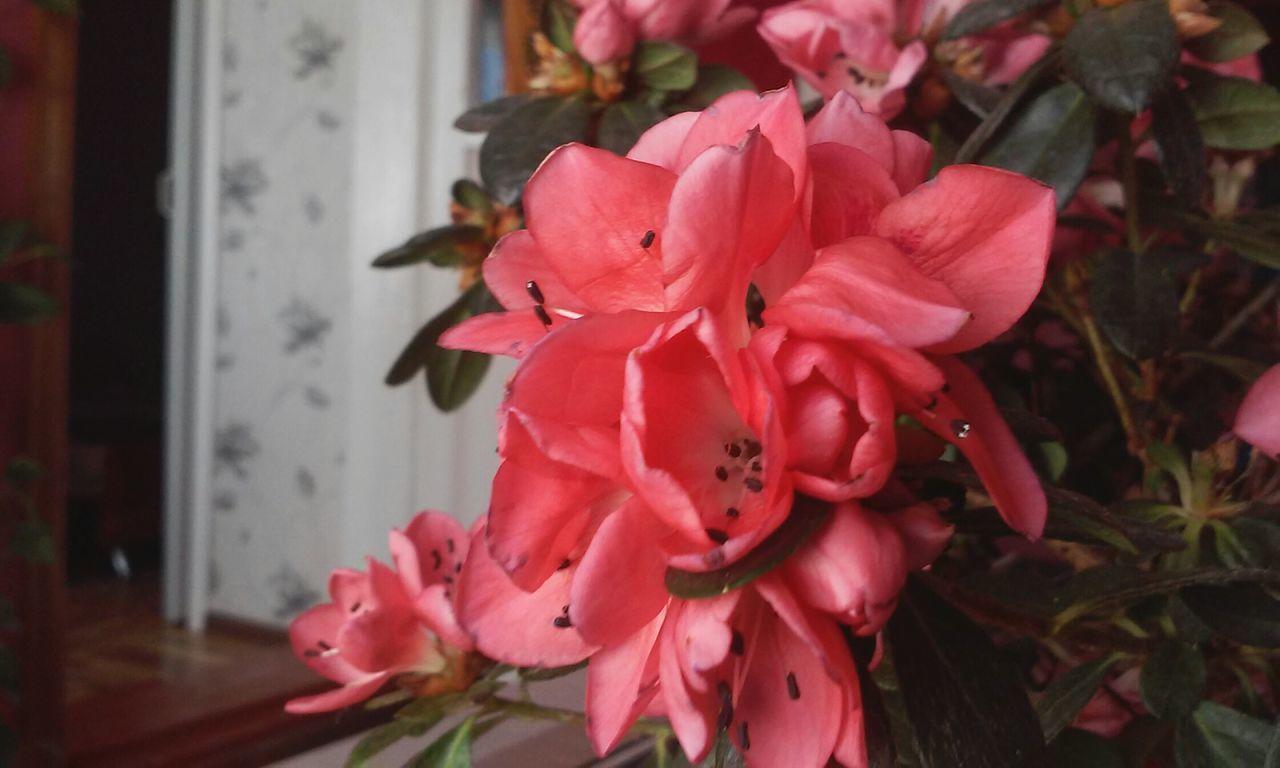 Flower цветочки любовь комнатные цветочки Beautiful ♥ Beautiful🐇🐇🐇🐇 красота💕🌸🌹