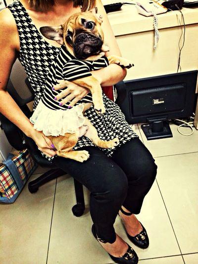 thunder is in girly style ??? Frenchbulldog I Love My Dog My French Bulldog <3 my pet