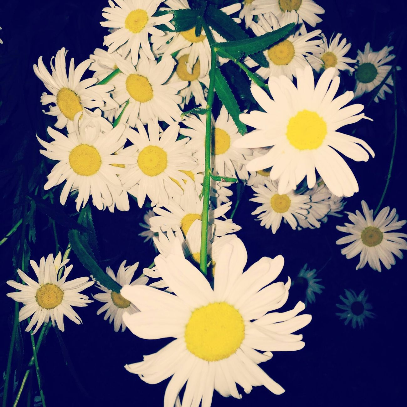 Daisy's Flowers Stuff
