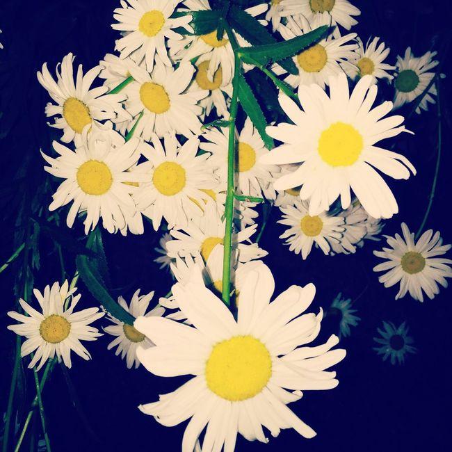 Daisy's Flowers Stuff