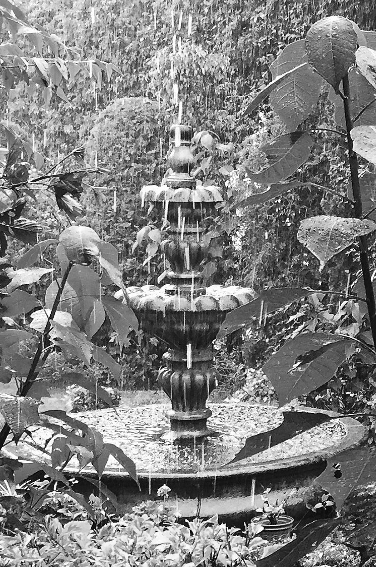 Raindrops Rain In My Garden Fountain Melancholic Landscapes Rainy Days Secret Garden Blackandwhite EyeEm Best Shots - Black + White UnspokenGrief My Best Photo 2015