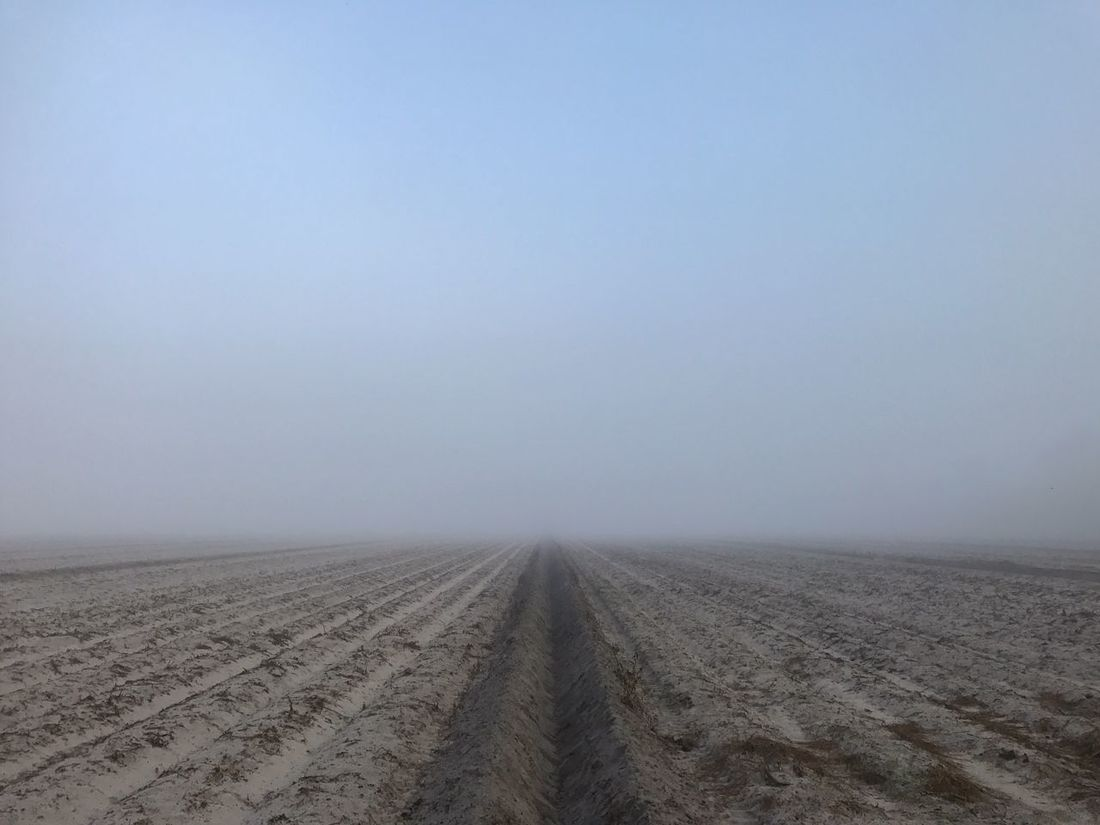 Farm field emerging from a foggy morning. Farm Field Agriculture Rural Scene Foggy Morning Irrigation Canal Landscape Outdoors Fog Nature Sandy Soil No People Crop Production Row Of Things Rows