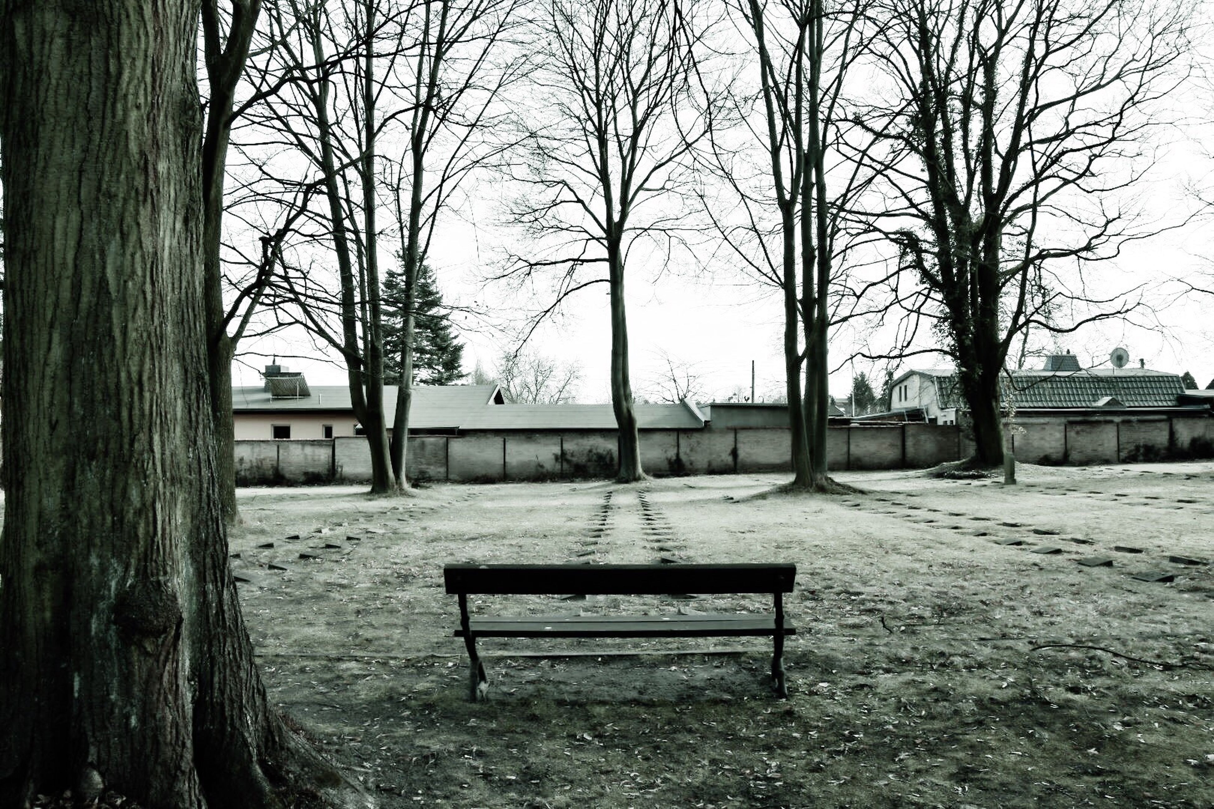 tree, playground, outdoors, no people, nature, bare tree, day