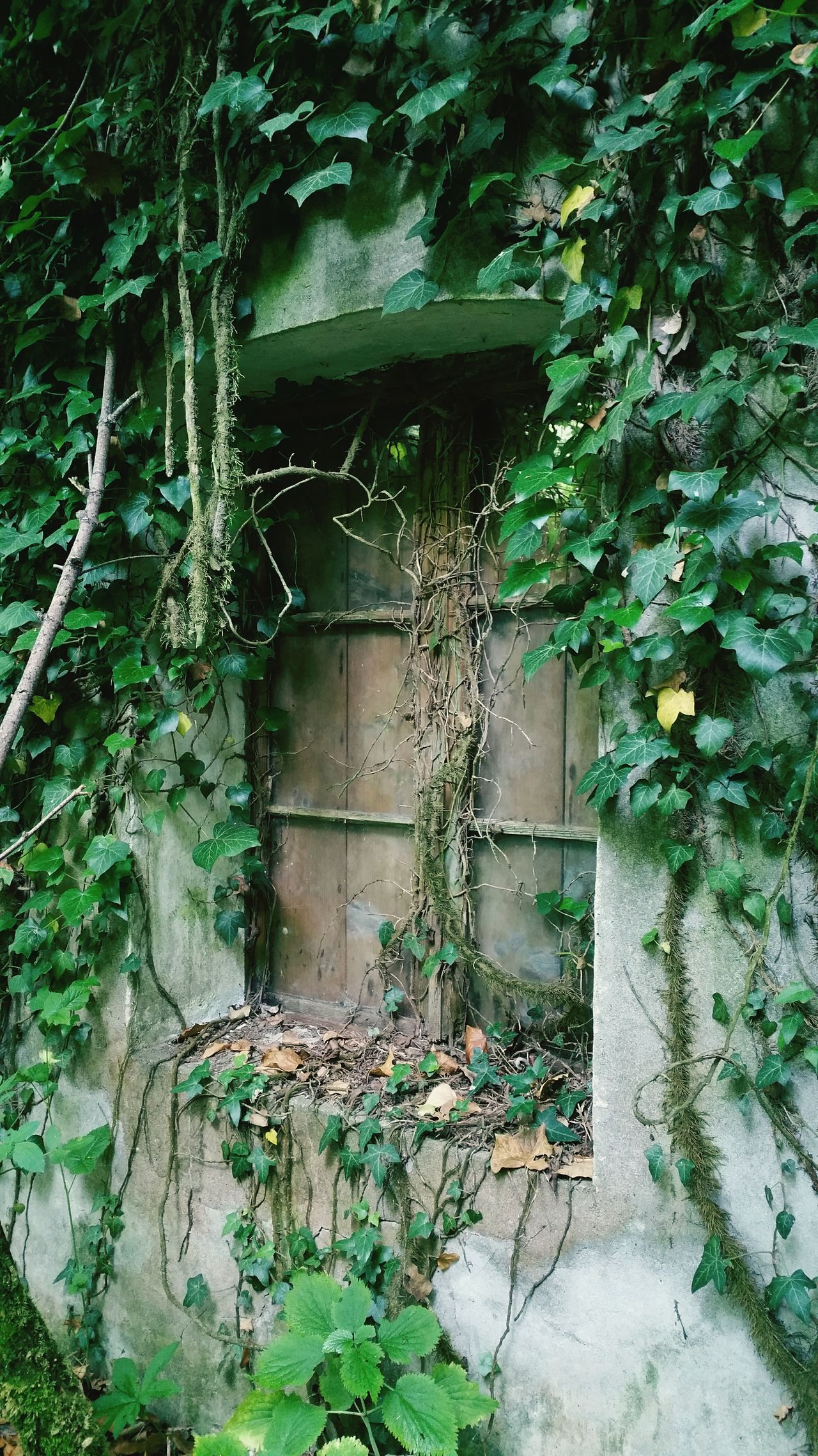 Abbandonato... Windows Finestra Ruined Pulfero Sosnie Udine Friuliveneziagiulia Friuli Venezia Giulia Italia