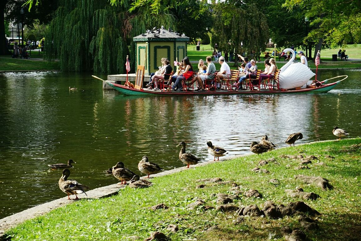 Duck Animals In The Wild Large Group Of People Water Wildlife Togetherness Bathing Swimming Tourism Tourist Person Ducks At The Lake Ducks😄 Ducks On Pond