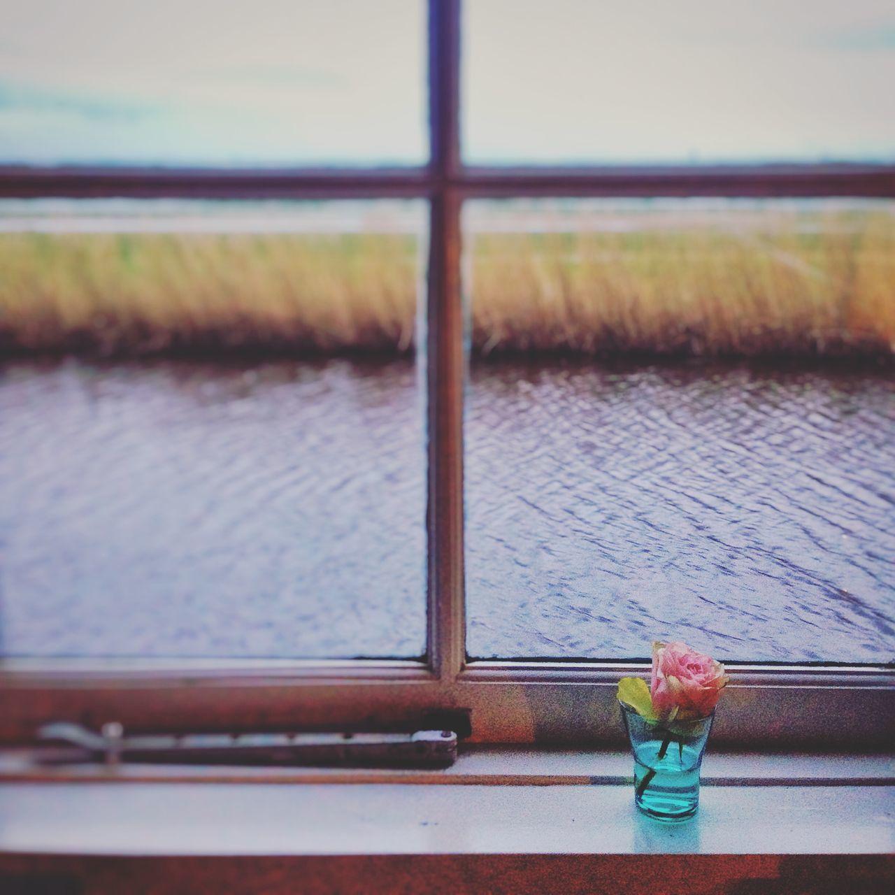 Amsterdam Holland Netherlands Water Flower River Field Hidden Gems  Colour Of Life Art Is Everywhere