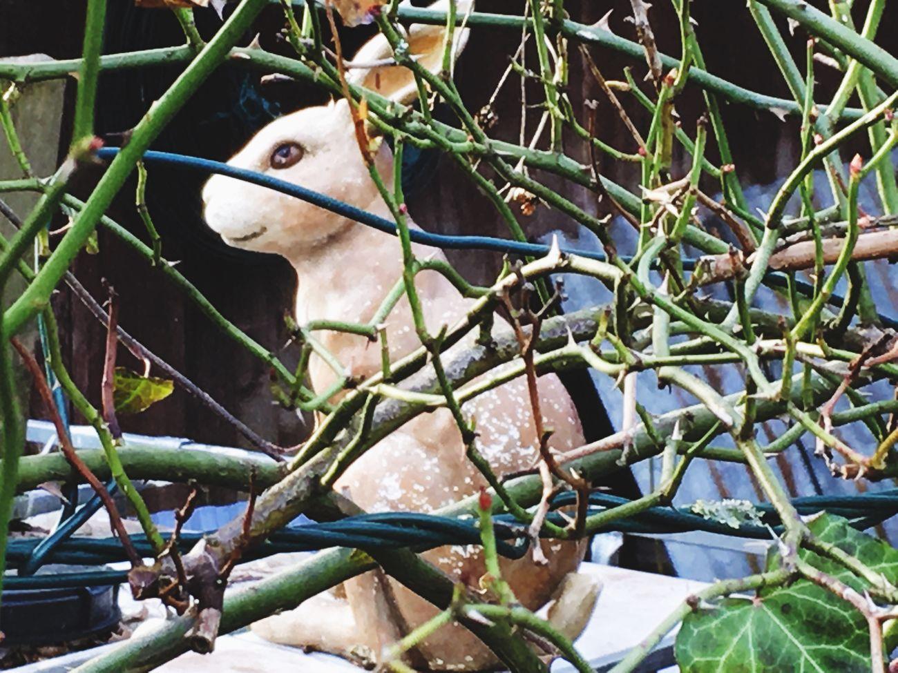 Es ist nicht der Osterhase Animal Themes Outdoors draht Garten Liebe One Animal Day No People