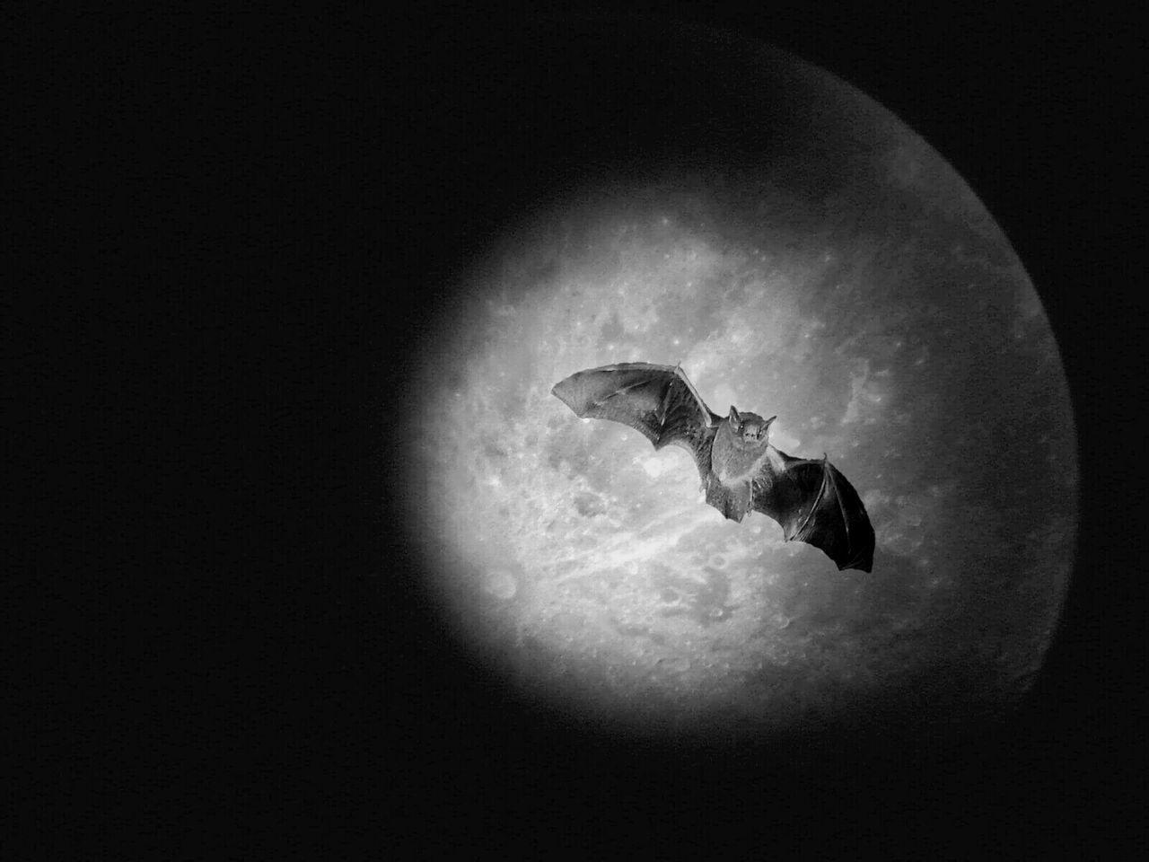 Beautiful stock photos of fairy,   Ambatt?r,  Ambattūr,  Animal Themes,  Animal Wildlife
